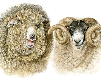 Sheep Picture - A3 limited Edition Print