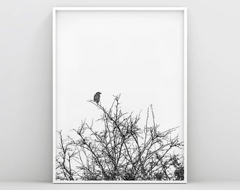 Bird Prints, Black and White Bird Wall Decor, Bird Print Art, Bird Wall Print, Animal Wall Poster, Bird on Tree, Nursery wall art, Nordic