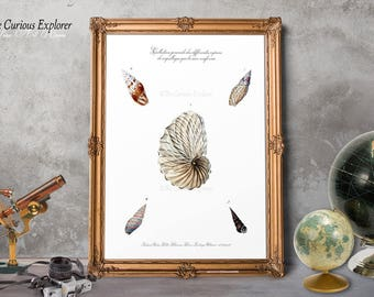 Ocean Animal Poster, Kitchen Seashell Art, Seashell Wall Art, Wife Gift Home Decor, Rustic Room Decor, New Home Gift Poster - E5g43