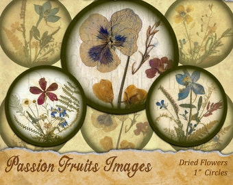 Pressed Flowers-- 1 inch bottlecap rounds Digital Collage Sheet-- Instant Download