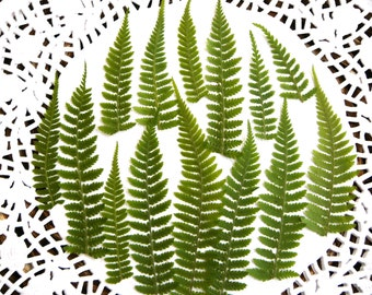 Dried pressed fern leaf, real dried fern leaves 20 pcs.