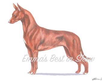 Pharaoh Hound Dog - Archival Fine Art Print - AKC Best in Show Champion - Breed Standard - Hound Group - Original Art Print