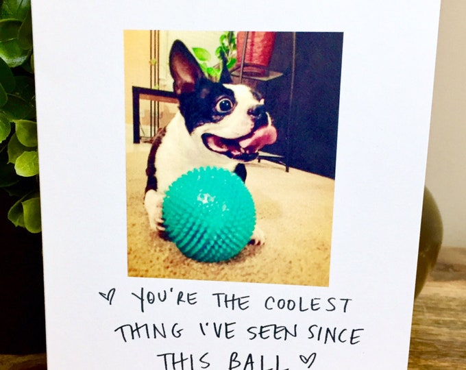 You're the coolest Card, Funny Just Because card, Boston Terrier Card, card for Dad, card for him, Father's Day Card, Dog Dad, father, dogs