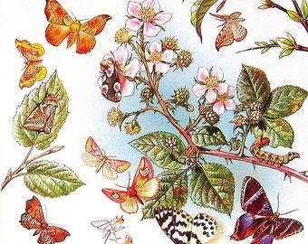 Butterflies - Superfamily Geometroidea -  1985 Butterfly Book Page - World Butterflies Book - 12 x 8 - 138