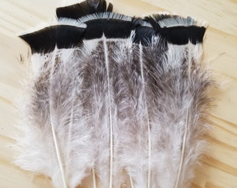UNIQUE Turkey Feathers Cruelty Free Humane Naturally Molted Real Feathers #d6