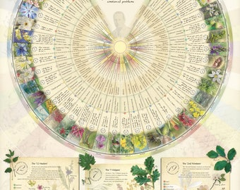 Bach Flower Poster Wall Chart for the 38 Essences. A1
