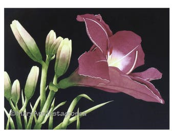 Lily Print, Flower Print, Floral Print, Giclee Print, Fine Art Print