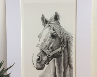 Horse Print- Giclee Special Edition- 'Beauty'