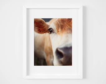Cow photography print - Farm animal art - Country wall decor - Rich earth tones - French country - Black and white - Nursery art - 11x14 set