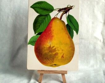 Antique Print d'une poire sur panneau - 1890 fruits chromolithographie - prêt pour l'affichage