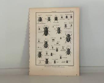 1788 INSECTS BEETLES ENGRAVING original antique insect engraving bug print - insect print - beetles print - entomology print