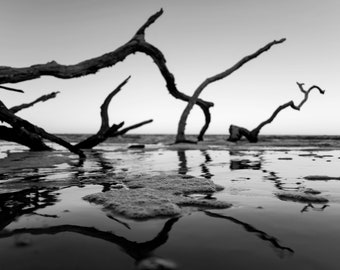 Black and White Driftwood Reflection