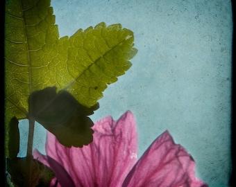 Blue Green Magenta Photograph--Leaf with Wildflower--TTV Fine Art