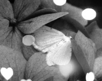 THE MOTH black and white art photo zine