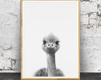 Baby Animal Prints, Baby Emu Print, Australian Animal, Baby Animals, Nursery Animals, Nursery Printable, Printable Emu Baby, Printable Emu