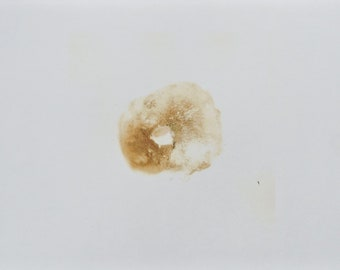 Suillus mediterraneensis / Boletus mediterraneensis spore print.