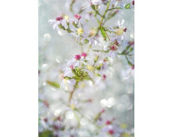 Flower Photography, Zen Art, Abstract Photography, Wood Aster Photo, White Floral Wall Art, Bedroom Decor, Romantic Art