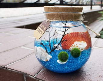 Marimo Terrarium kit with moss ball/blue glass gravel/sea fan/scallop shell-lamplight underwater/living home decor/office work desk decor