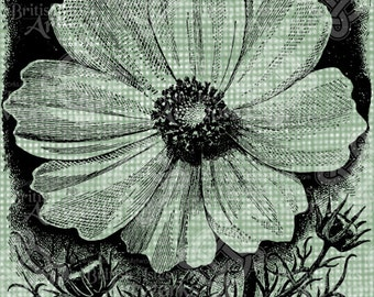 Digital Download Cosmos Flower Floral Botanical image, Antique Illustration, digi stamp, digis, digital stamp, Elegant, Transfer