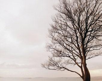 Tree Print - Grey Seascape Fine Art Photograph - Irish Winter Tree - Strangford Lough - 8x10