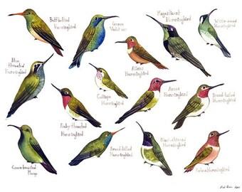 Hummingbirds of North America Birds Field Guide Art Print  / Watercolor Painting / Wall Art / Nature Print / Bird Poster