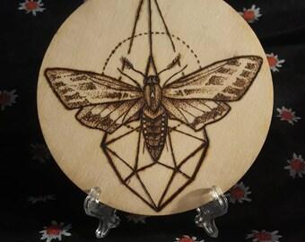 Geometric moth burning