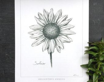 Sunflower Botanical print