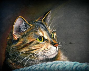 Maine Coon Tabby Cat Fine Art Canvas Print - 40 x 60cm