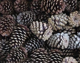 """Pinecones - 1 dozen 2.5-4"""""""