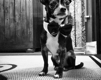 Bow Ties for Dogs