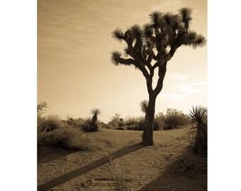Joshua Tree Print | Desert Landscape photography | wall art home decor
