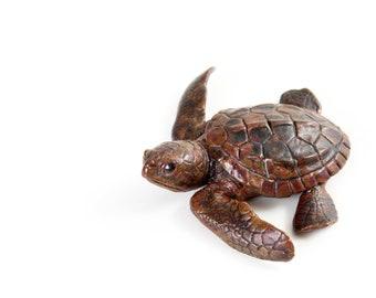 Turtle hatchling facing left. Bronze, mottled brown patination