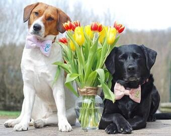 Monogram Dog Bow Tie Hot Pink Seersucker || Monogrammed Preppy Bowtie || Custom Gift by Three Spoiled Dogs