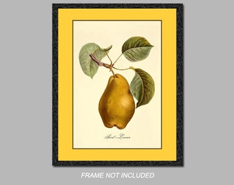 Botanical Art Print - Saint-Lezain - 8x10, 11x14, and 16x20 - Wall Art - Digital Matte - Ready to Frame, Vintage Kitchen Wall Decor