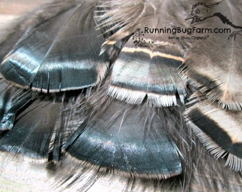"""Real Feathers Turkey Feathers Cruelty Free Feathers Natural Feathers Real Bird Feathers Loose Tail Feathers For Crafts Organic Qty 15 5-5.5"""""""