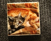 "Magnet - Cats ""Best Friends""  1.75in x 1.75in"