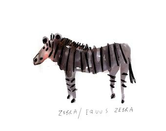 Zebra / Equus Zebra