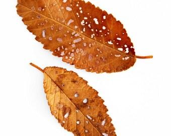 Fall leaves photo, fall decor, autumn leaf art, leaf abstract art, rustic home decor, nature wall art, fine art photography, log cabin decor