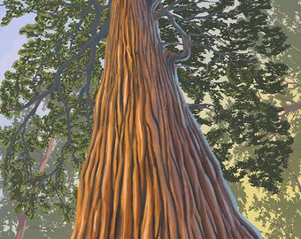Big Sur, California - Tree Looking Up (Art Prints available in multiple sizes)