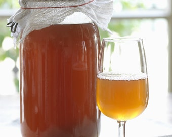One and a Half Cups of Extra Organic Strong Kombucha Starter Tea for your SCOBY