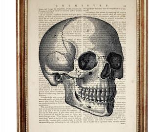 Skull Anatomy Prints, Anatomy Art Prints, Anatomy Dictionary Art Print, Medical Artwork Gifts, Bones Dictionary Art, Human Anatomy Poster