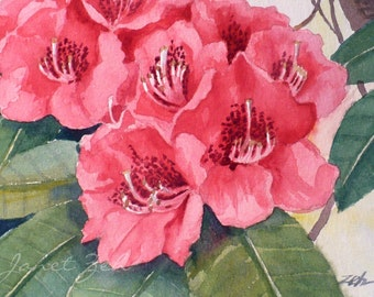 Pink Flower Painting Original Watercolor Rhododendron Floral Garden Art Matted 8x10 by  Janet Zeh Original Art
