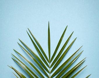 Nature Art Print, Palm Leaves, Tropical Art, Botanical Print, Teal, Green, Plant Art, Nature Decor, Minimalism Art, Bathroom Art, Art Print