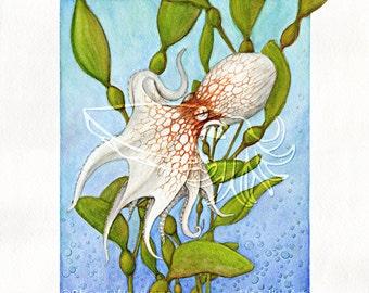 Octopus in Kelp Forest, 8x10 Print on Fugi Crystal Archive Matte - Unframed