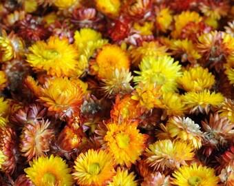 100-500 Orange Strohblumenköpfe, Getrocknete Strohblumen als Dekoration, Hochzeitsdekor, Duftblumen, Potpourri, Unterschiedliche Größen