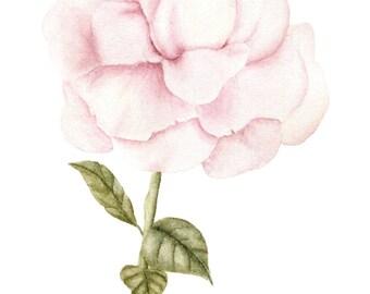 Watercolor Quicksand Rose