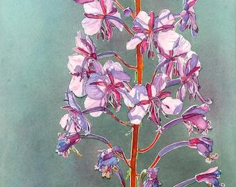 Fireweed-Rosebay Willowherb original watercolor art by Shirley Greenville