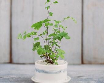 Mini Striped Porcelain Planter with Drainage