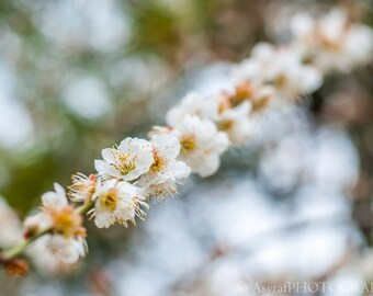 Floral Wall Art, Spring Photography, Plum Blossoms, Large Canvas Print, Flower Photography, Bokeh Flower Photo, Home Decoration
