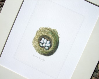 Bird Nest with Dark Pink Speckled White Eggs Naturalist Drawing Archival Quality Print